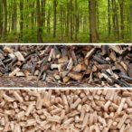 Kůrovcová kalamita a budoucnost dřevních paliv: Jak se obejdeme bez smrku?