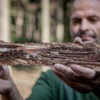 Kůrovcová kalamita, ceny dřeva a pelet
